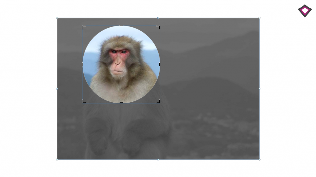 custom image cropping in powerpoint
